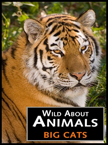Wild About Animals  Big Cats
