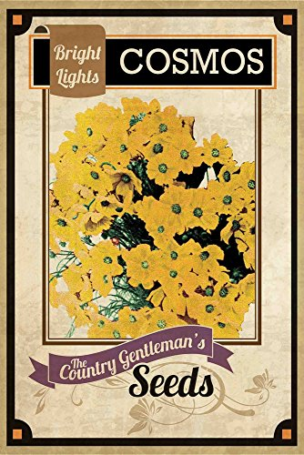 Marmont Hill Vintage-Farm Kitchen 'Flower Packet Cosmos' Canvas Wall Art, 20