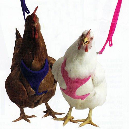 Valhoma Chicken Harness