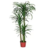 Artificial Plants Dracaena Draco Dragon Tree Plants, Large Silk Green Leaves Dracaena Draco Dragon Tree Plants, 160cm Tall, With No Pot(585#)