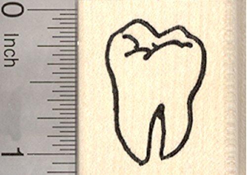 Stamp Ruler (Tooth Rubber Stamp, Molar, Dentist, Dental)