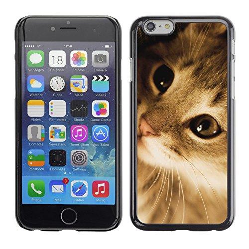 """Premio Sottile Slim Cassa Custodia Case Cover Shell // V00003212 chaton mignon paresseux // Apple iPhone 6 6S 6G PLUS 5.5"""""""