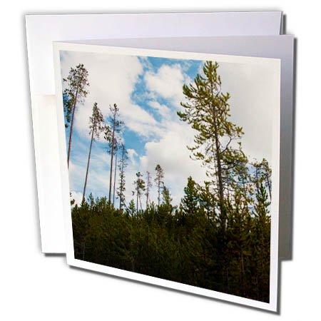 3dRose Jos Fauxtographee- Yellowstone Trees - Trees in Yellowstone shot upward toward the sky - 1 Greeting Card with envelope (gc_273461_5) (Park Upward Holiday)