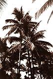 Sepia Palm 1 , 36x24in. (paper)
