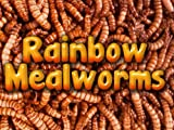 5000 Live Mealworms, Reptile, Birds, Chickens, Fish Food (Medium), My Pet Supplies