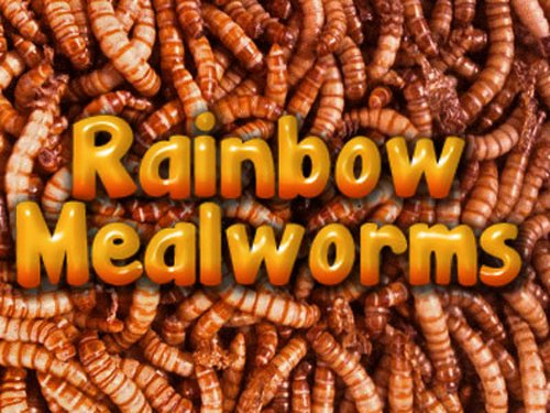 5000 Live Mealworms, Reptile, Birds, Chickens, Fish Food (Small), My Pet Supplies