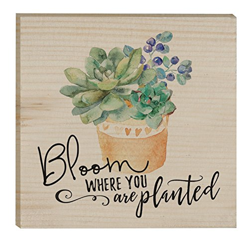 Bloom Where You Are Planted Succulent Plant 3 x 3 Inch Solid Pine Wood Rustic (Bloom Where God Plants)