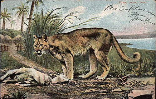 Puma Other Animals Original Vintage Postcard from CardCow Vintage Postcards