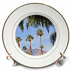 3dRose Danita Delimont - trees - Fan Palms Trees, Palm Springs, California - 8 inch Porcelain Plate (cp_259059_1)