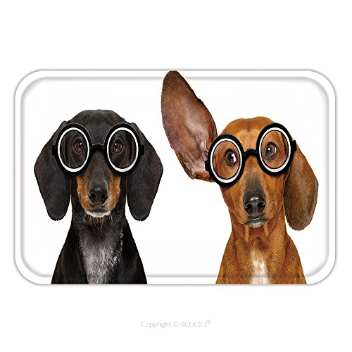 Flannel Microfiber Non-slip Rubber Backing Soft Absorbent Doormat Mat Rug Carpet Couple Of Dumb Silly Dachshund Sausage Dog Wearing Funny Nerd Glasses Isolated On White 591646313 for - Glasses Nerd Australia