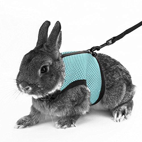 [QTMY Soft Harness With Lead for Rabbits Hamsters cats (M, Blue)] (Rabbit Leads)