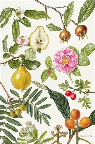 Quinces and Other Fruit Bearing Trees de Elizabeth Rice/Bridgeman Images Posterlounge Cuadro de PVC 120 x 180 cm Hogar y cocina
