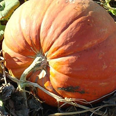 Pumpkin Garden Seeds - Baby Max Pumpkins - Heirloom, Non-GMO - Pinkish Orange Pumpkin Variety - Vegetable Gardening Seed