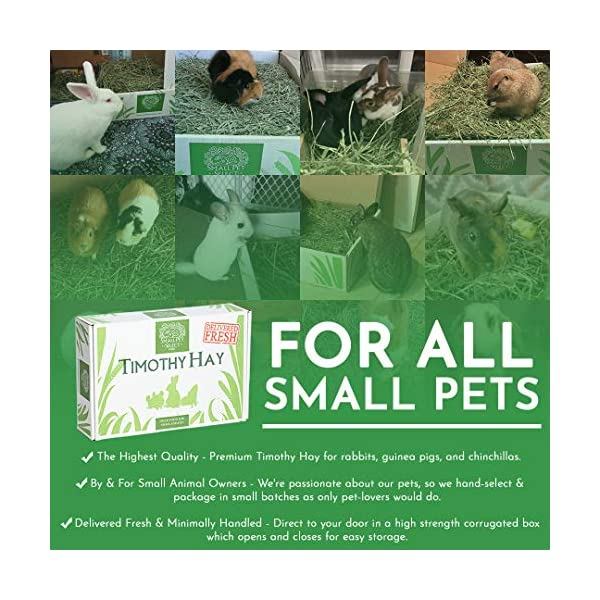 """Small Pet Select 2nd Cutting """"Perfect Blend"""" Timothy Hay Pet Food 12"""