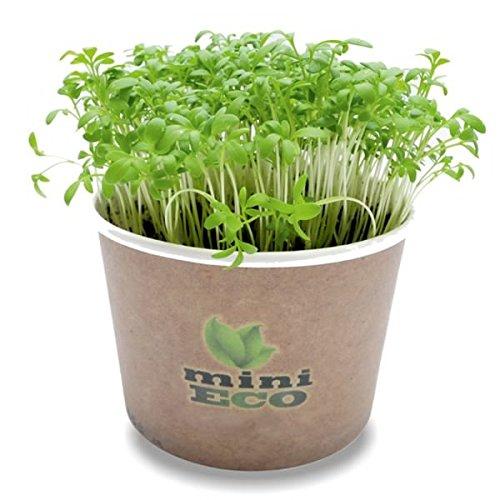 Fast Growing Indoor Plants: Amazon.co.uk