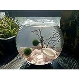 NewDreamWorld Footed Bowl Marimo Aquarium- Morganite Gravels 2 Live Moss Ball Seafan White Rabbit Conch Desk Decor