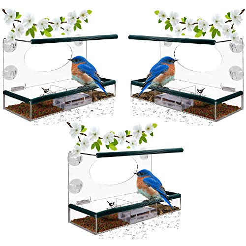 - Birdious 3-Pack Wild Window Bird Feeder: Enjoy Unique Watch Small & Large Birds. Clear See Through Birdfeeder; Easy Mounted 4 Strong Suction Cups. Unusual Gifts for Kids Love