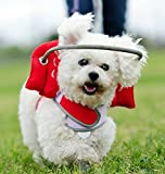 Muffin's Halo Guide For Blind Dogs - Angel Wing Red