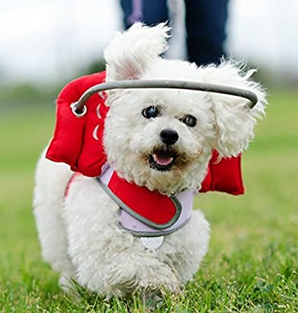 Amazon Com Muffin S Halo Guide For Blind Dogs Angel Wing Red Xs