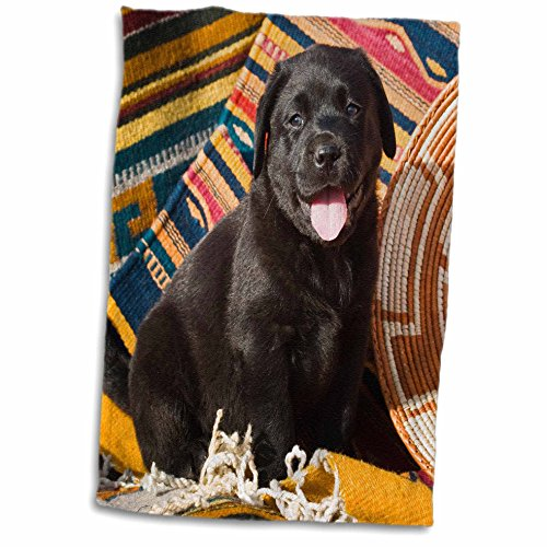 - 3dRose A Black Labrador Retriever Puppy dog-NA02 ZMU0153-Zandria Muench Beraldo Towel 15