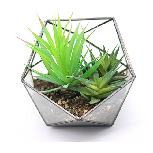 Modern Tabletop Black Glass Pentagon Geometric Terrarium Container Window Sill Decor Flower Pot Balcony Planter Diy Display Box for Succulent Fern Moss Air Plants Mniature Fariy Garden Gift (No Plant) by Purzest