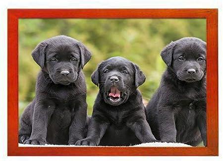 Labrador Head Wooden Photo Picture Frame Gift Landscape Or Portrait Gun Dog Gift 208