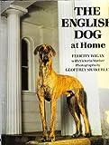 English Dog at Home