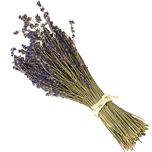 WGIA Natural Dried Lavender Bundles - Freshly Harvested Lavender Bunch Royal Velvet Decorative Flowers Bouquet for Wedding DIY Home Party & Valentine's Day Gifts - 1 Bundle Pack