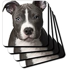 3dRose cst_4240_3 American Pit Bull Terrier Puppy Ceramic Tile Coasters, Set of 4