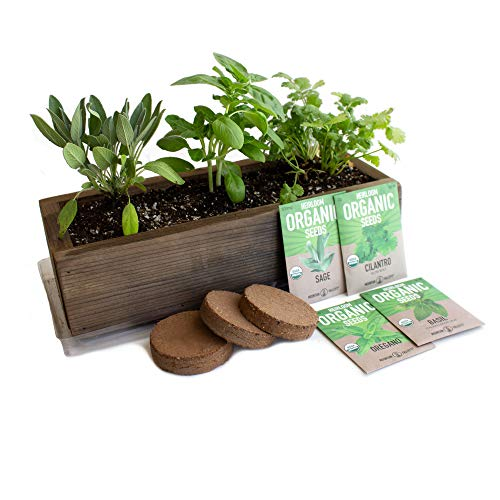 Culinary Indoor Herb Garden Kit with Reclaimed Barnwood Style Planter – Rich Brown – Grow Cooking Herbs – Non-GMO, Organic Seeds: Basil, Cilantro, Oregano & Salvia Officinalis – Windowsill Gardening