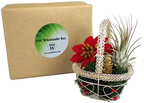 Decorative Holiday Themed Decor DIY Gift Basket with Live Tillandsia Air Plant in Gift Box