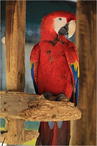 Amazon in: Buy The Scarlet Macaw Parrot Journal: 150 Page