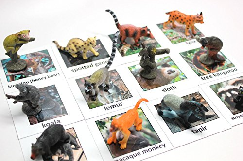 (Montessori Rainforest Animal Match - Miniature Rain forest Animals with Matching Cards - 2 Part Cards. Montessori Learning Toy, Language Materials)