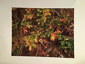 Chuck Henningsen Original Cibachrome Print, Fall Leaves, Zion National Park, UT 1989