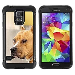 Suave TPU GEL Carcasa Funda Silicona Blando Estuche Caso de protección (para) Samsung Galaxy S5 V / CECELL Phone case / / Pit-Bull Dog Brown Golden Pet /