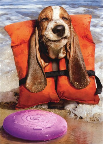 Basset Hound In Life Jacket - Avanti Funny Dog Birthday Card