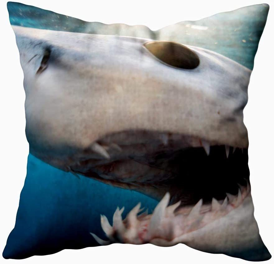 Shorping 20X20 Pillow Case, Christmas Pillow Covers Fall Throw Pillow Covers Red Throw Pillow Covers Shark Diving in The Sea of with Coast Cabo San Mexico a Mako Lucas Snow Pillow Covers for Home