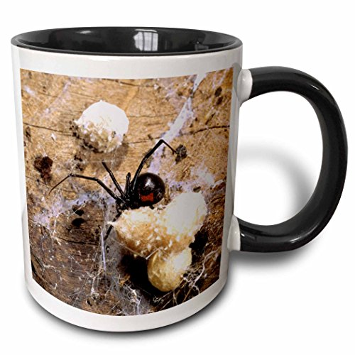 3dRose Danita Delimont - Spiders - Madagascar, Malagasy black widow spider, egg sacs-AF24 POX0029 - Pete Oxford - 11oz Two-Tone Black Mug (mug_75203_4) - Black Widow Spider Egg