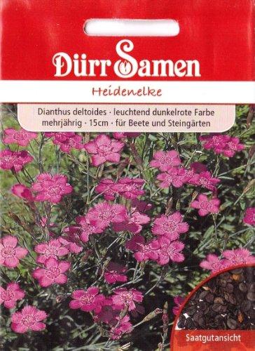 Heidenelke, Dianthus deltoides, ca. 250 Samen