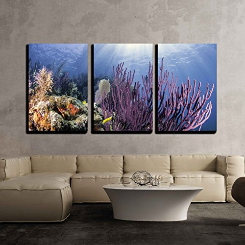 (wall26 - 3 Piece Canvas Wall Art - Coral Reefs of North America - Modern Home Decor Stretched and Framed Ready to Hang - 16