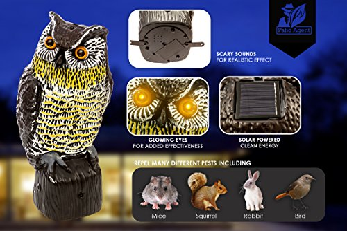 Mallard Duck Facts (Premium Solar Powered Scarecrow Owl By Patio Agent - Large Realistic Owl Design - 3 Light Sensors Activate Flashing Eyes & Scary Sounds - Effective Bird, Rodent & Other Pest Control)