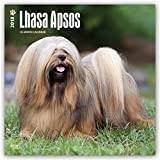 Lhasa Apsos 2018 12 x 12 Inch Monthly Square Wall Calendar, Animals Dog Breeds (Multilingual Edition)