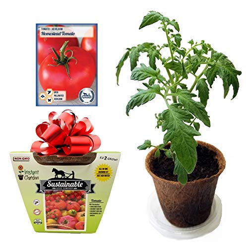 - Tomato All-in-One Growing Kit, Non GMO Heirloom Tomato Seeds (Homestead)