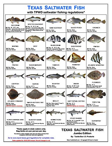 - Tackle Box I.D. Texas Saltwater Fish Identification Card - Jumbo Edition