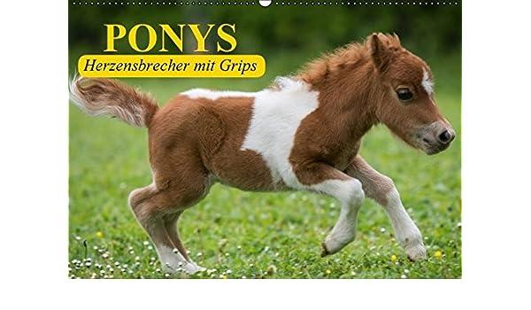 Ponys. Herzensbrecher mit Grips Wandkalender 2016 DIN A2 ...