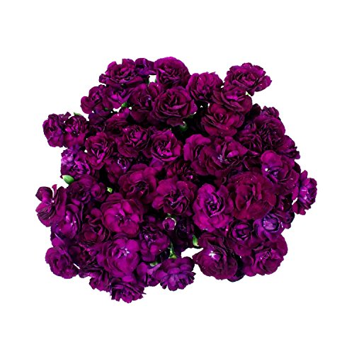 fresh-cut-florigene-moon-velvet-deep-purple-mini-carnations-200-stems