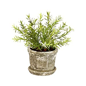 "10"" Flowering Rosemary in Cement Pot Green Lavender (pack of 4) 6"