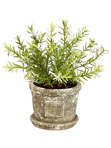10-Flowering-Rosemary-in-Cement-Pot-Green-Lavender-pack-of-4