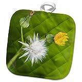 3dRose Danita Delimont - Flowers - WA, Redmond, Tansy Mustard, Flower - US48 JWI2148 - Jamie and Judy Wild - 8x8 Potholder (phl_96163_1)