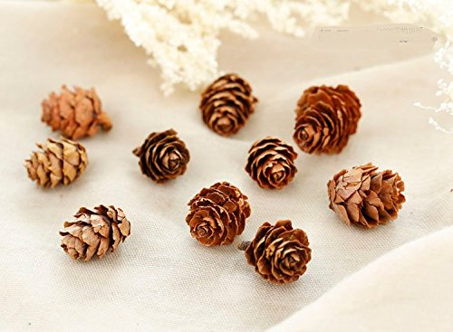 50-piece-real-natural-mini-size-dried-pine-cones-for-potpourri-bowl-fillers-and-craftingunscented